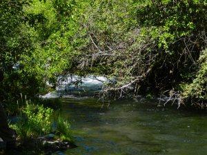 Hat Creek at Hat Creek Campground