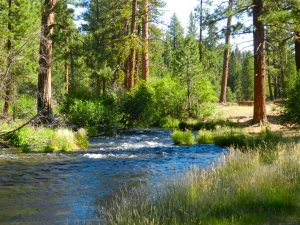 Hat Creek at Old Station Picnic Area