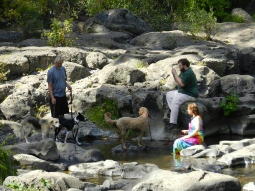 Humans and dogs above the falls