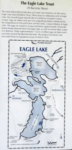 Eagle Lake Trout