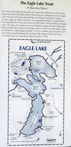 Eagle Lake Trout