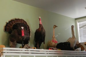 Menagerie in the meeiting room