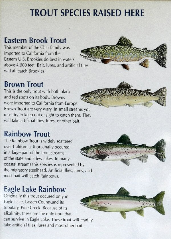 Fishing pit river country page 2 for How to fish for lake trout