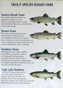 Trout Raised at Crystal Lake