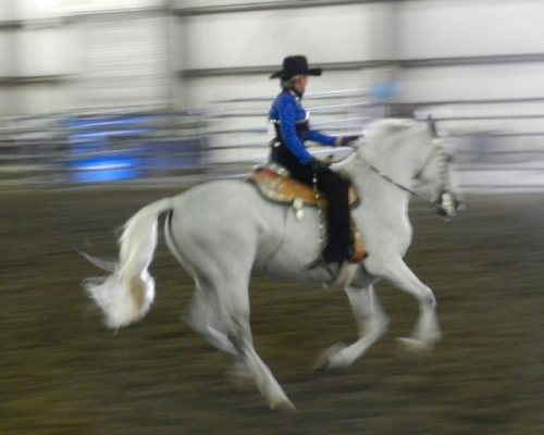 Johan-Nass riding Bendido in competition