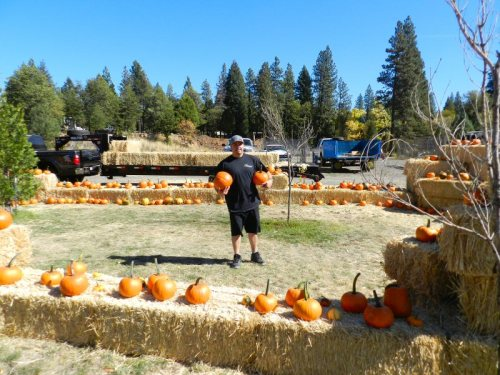Alvarez preparing the pumpkins