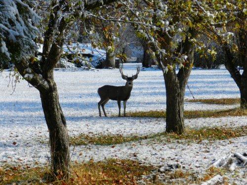 Deer on Rising River Ranch