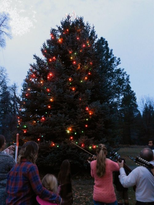 Christmas Tree Lighting at the Mountain Community Center