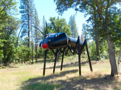 Giant bug in the woods