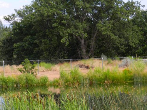 New fence across the pond at Cassel Forebay