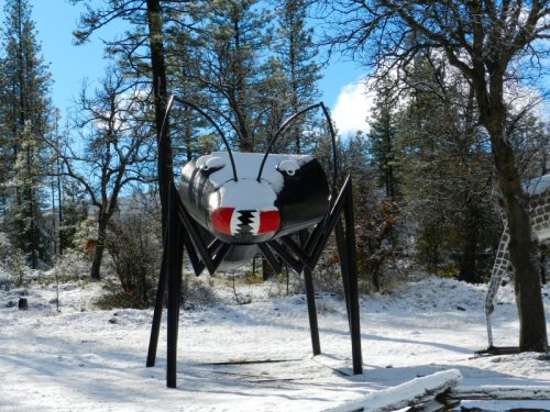 Bug in the winter woods