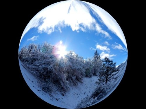 Circle of snow, trees, and light